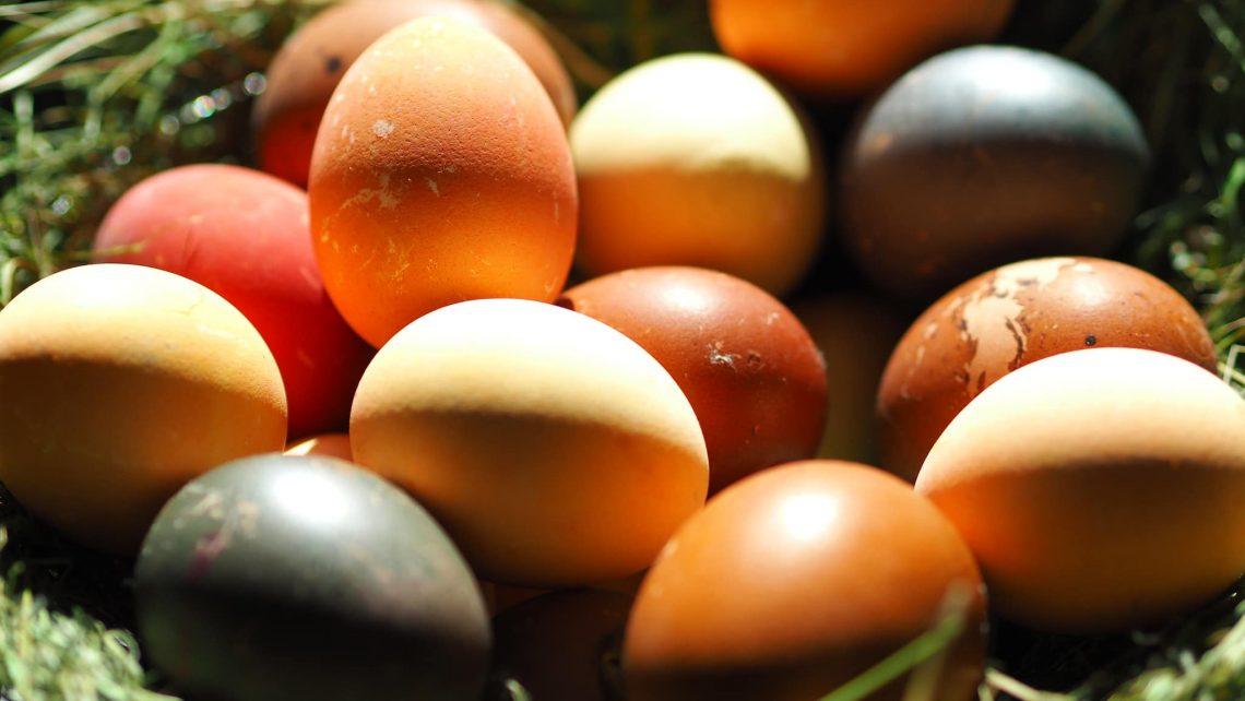 Ostern Eier Tradition Humanismus
